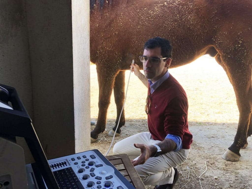 Equine echocardiography